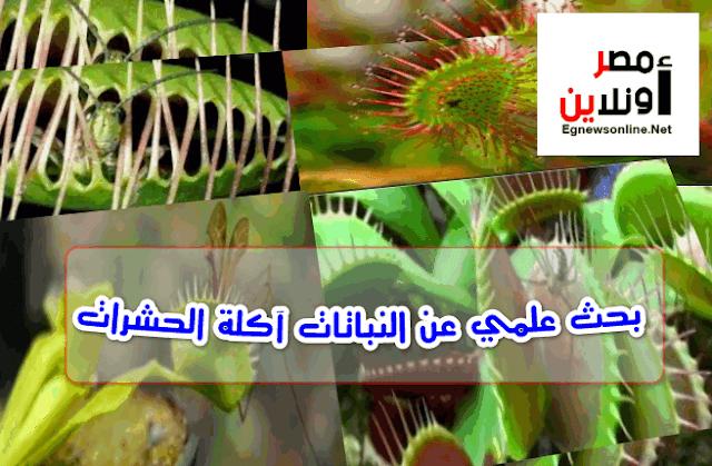 بحث علمي عن النباتات آكلة الحشرات