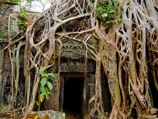 Thiên nhiên và kiến trúc kết hợp với nhau một nét đẹp ấn tượng của Ta Prohm.