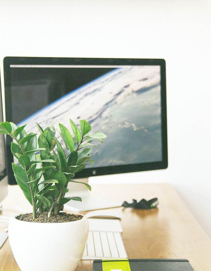 Zamioculca em vaso cerâmico branco na decoração de escritório. De baixa manutenção, a Zamioculca é a planta ornamental ideal para locais com pouca iluminação natural.