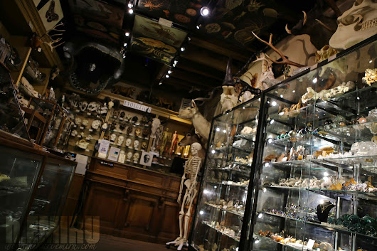 New york shopping, The evolution store, Marvelously Macabre curiosities.
