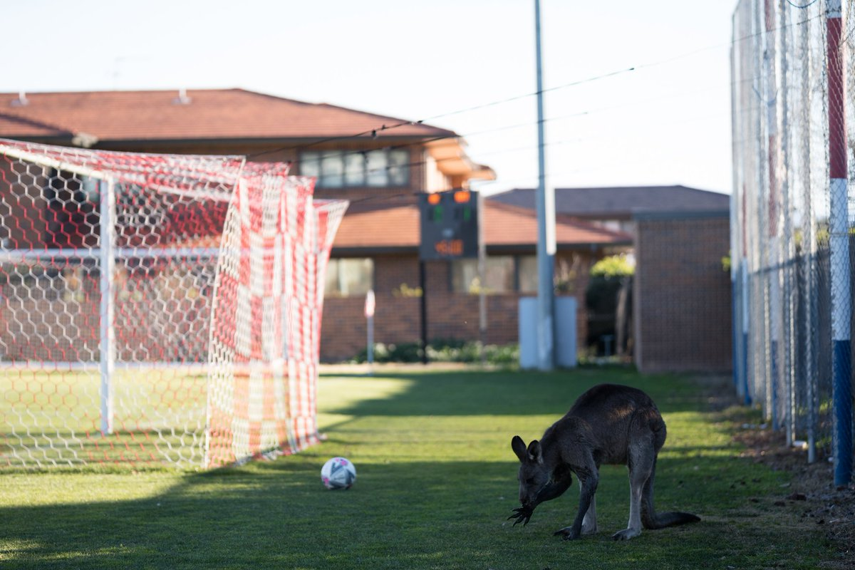 A kangaroo in Canberra, Australia gets into the World Cup mood