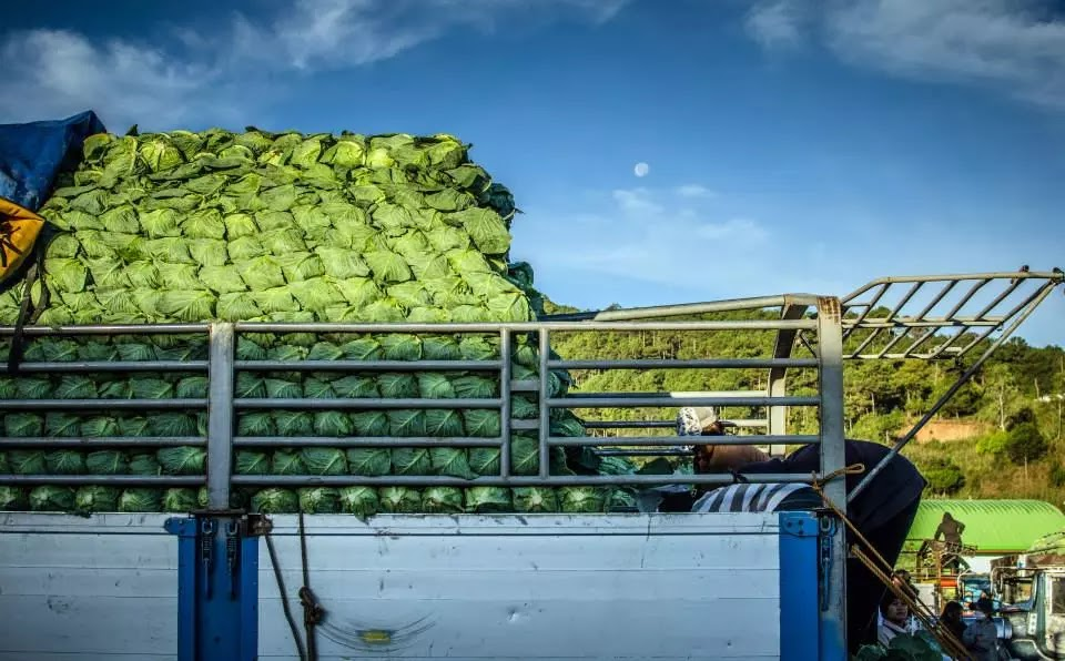 Vegetable Produce being Stacked Trading Post La Trinidad Benguet Cordillera Administrative Region Philippines
