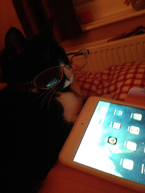 Cat glasses and Ipad