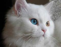 Mudar cor olhos no Gimp