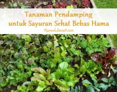 Tanaman Pendamping untuk Sayuran Sehat Bebas Hama
