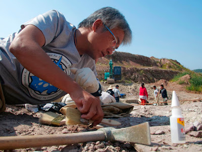 Bρήκαν κατά τύχη θαμμένους δεινόσαυρους στην Κίνα