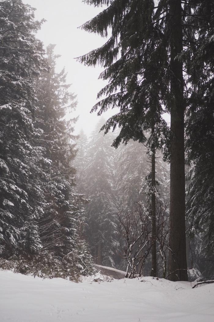 Forêt enneigée dans le Pilat