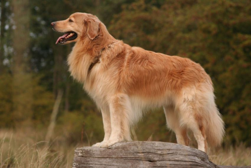 Different Types Of Dogs Pet 38