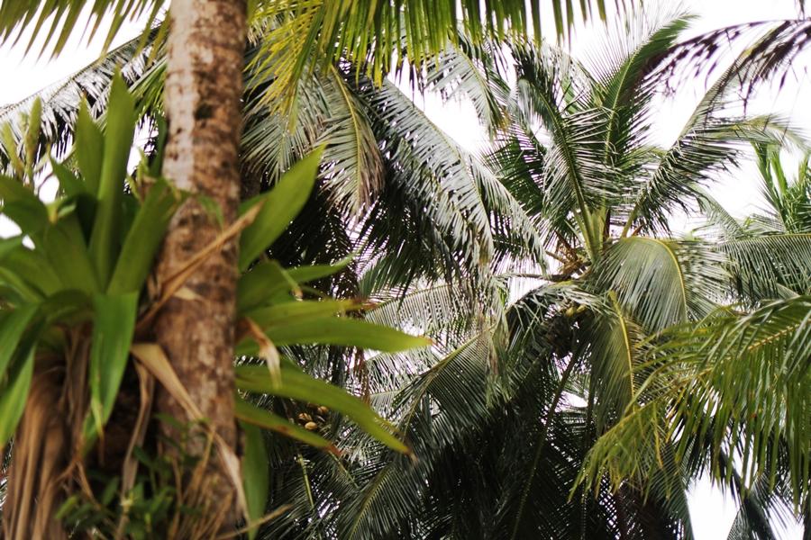 palmen strand panama