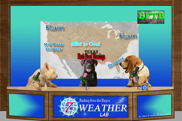 BFTB NETWoof Weather desk with Paisley the Weather Lab