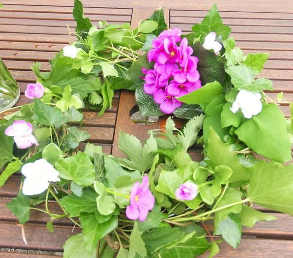 Efeu als Heilpflanze und Schmuckelement