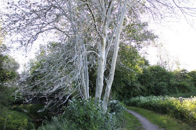 Baum Eingesponnen