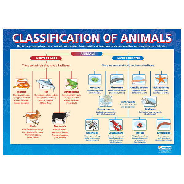animal classification unlimited science lessonpaths. Black Bedroom Furniture Sets. Home Design Ideas