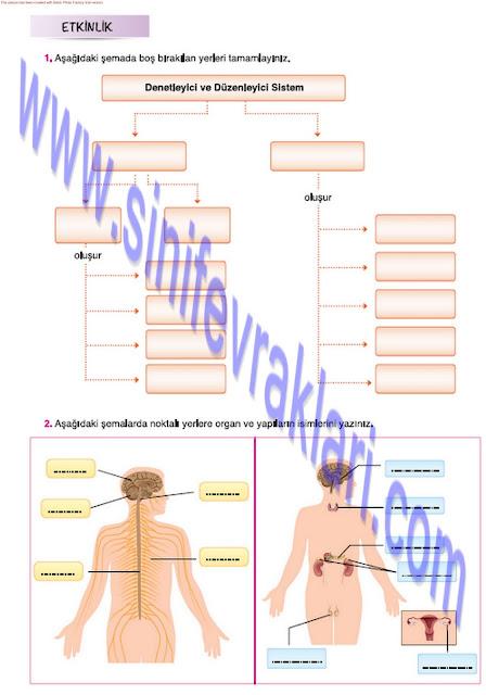 Mevsim Yayınları 7. Sınıf Fen Bilimleri Ders Kitabı Cevapları Sayfa 41