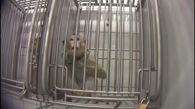 فيديو مسرب, مشاهد بشعة, تعذيب سادى للحيوانات, مختبر المانى,