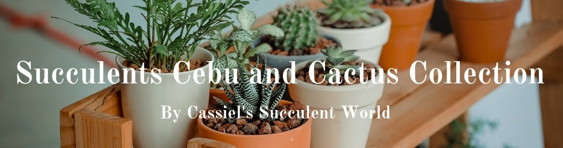 Succulents Cebu and Cactus Collection- Cassiel's Succulent World