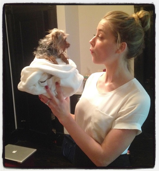 Amber Heard dog pistol