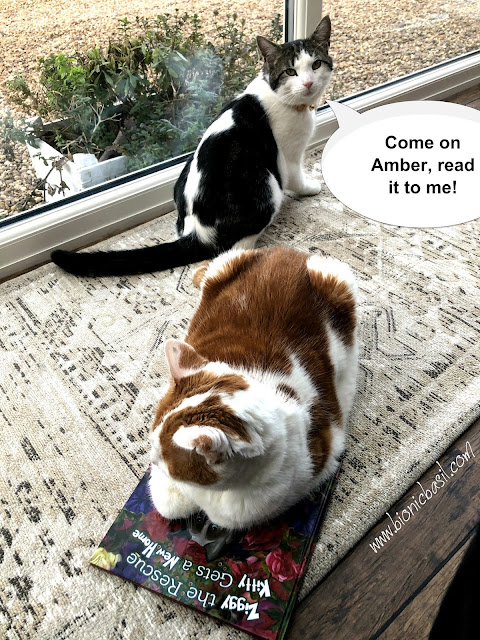 C:\Users\User\Pictures\Amber's Book Reviews Ziggy The Rescue Kitty Gets a New Home by Tama Ann Blake @BionicBasil® Feline Fiction on Fridays with Melvyn.jpg