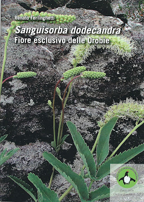 Sample page from a pamphlet called Sanguisorba dodecandra - Fiore esclusivo delle Orobie. S. dodecandra is commonly called Salvastrella orobica.