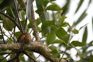 Jenis-jenis akar yaitu Akar penghisap
