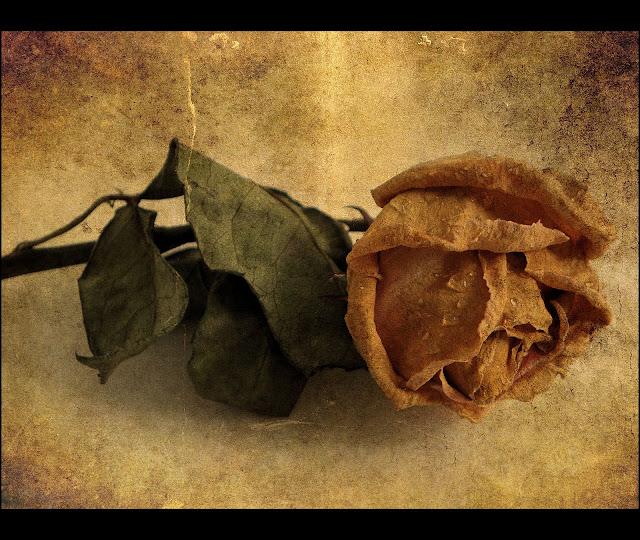 La flor marchita aun tiene perfume - 3 part 7