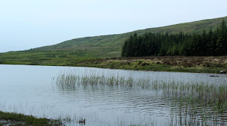 The Loch is very reedy and peaty