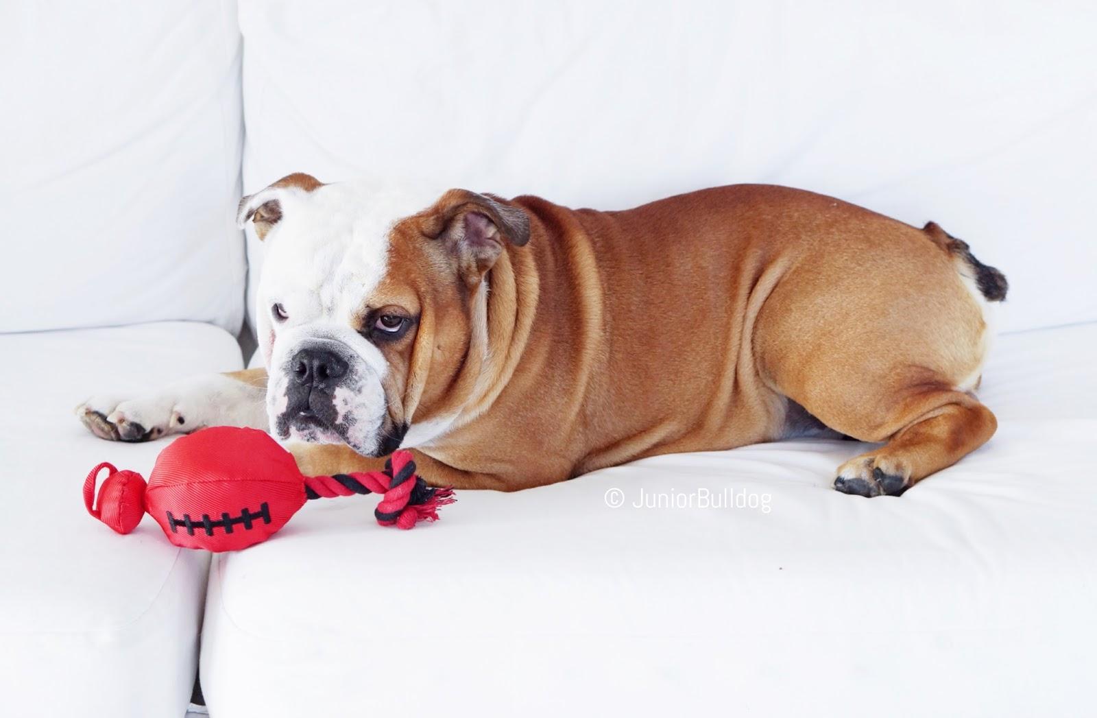 nerf catapulte chien jouet résistant