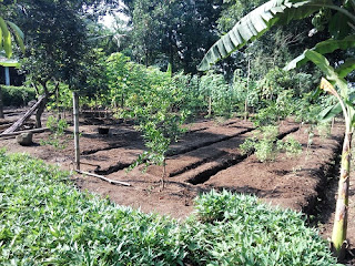 Kebun sebelum ditanami