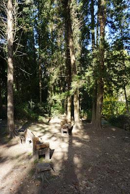 יער בנחל השופט