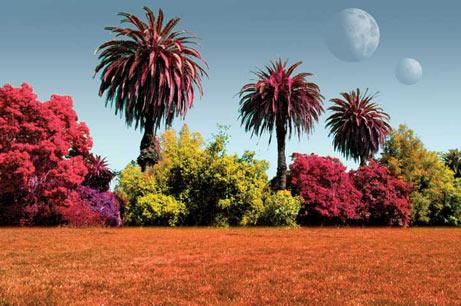 Plantas vermelhas