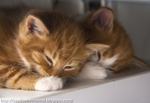 Two cute sleeping kitten.