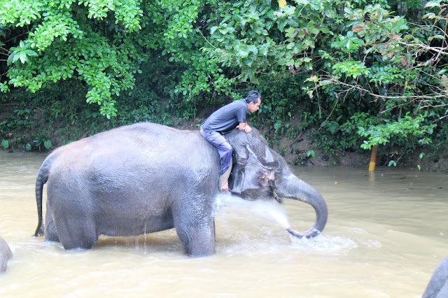 Elephant sanctuary in Malaysia
