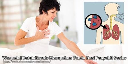 obat batuk kronis herbal alami