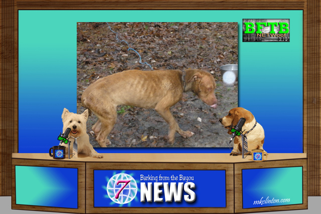 BFTB NETWoof News with emaciated dog on backdrop