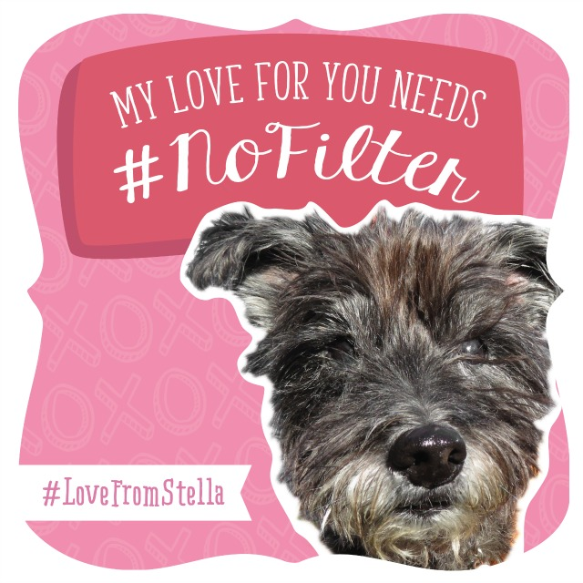 Love from Stella and Chewys digital Valentine card on Instagram