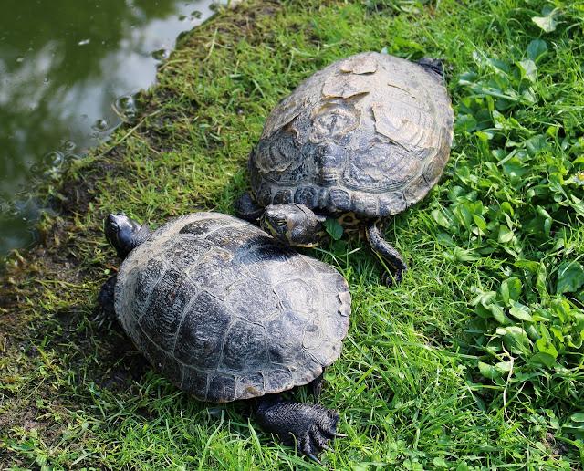 Schildkröten Tierpark Gera