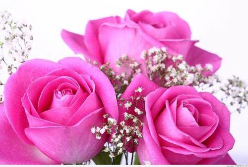 hình ảnh hoa đẹp nhất thế giới 21