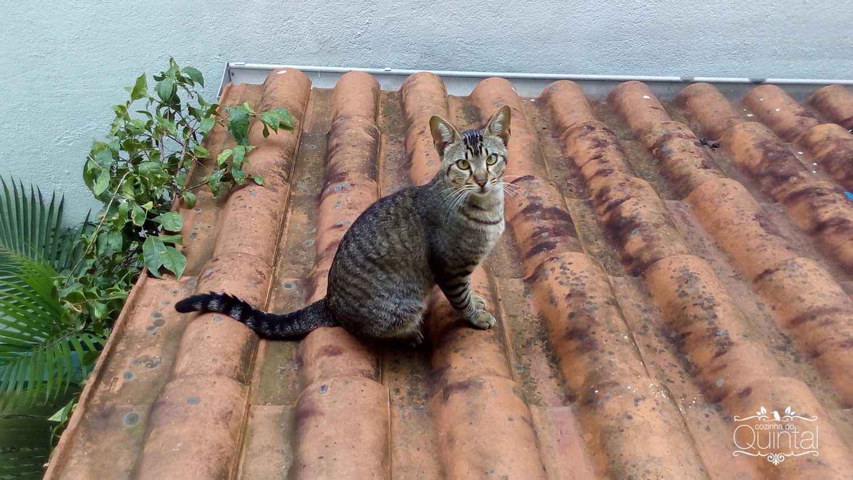 Kira no telhado