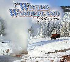 Winter Wonderland in Yellowstone