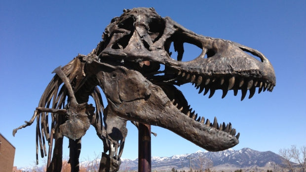 Tyrannosaurus rex probably had lips says palaeontologist