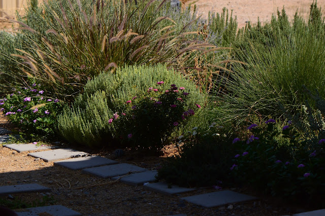 small sunny garden, amy myers, photography, desert garden, tuesday view