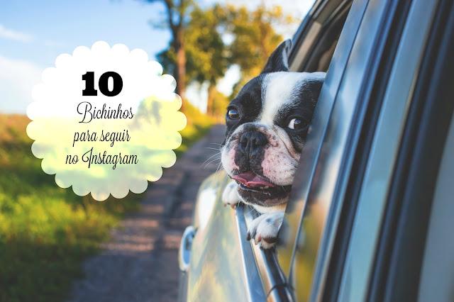 10 perfis de animais para seguir no instagram