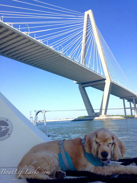 Sailing under Ravenel Bridge, Charleston, SC