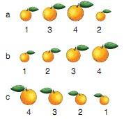Soal Matematika Kelas 2 SD Ulangan Semester 2