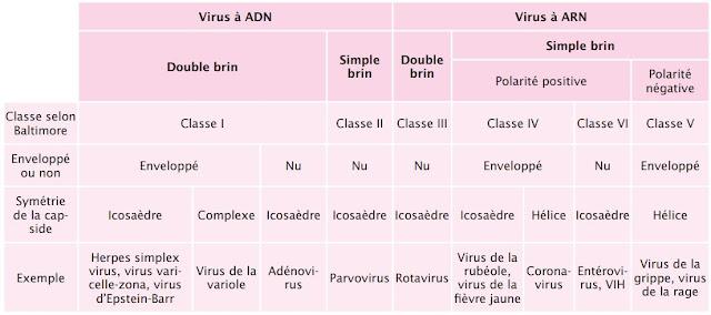 Classification des virus