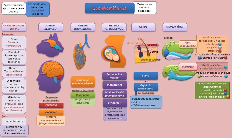 esteroides sus efectos