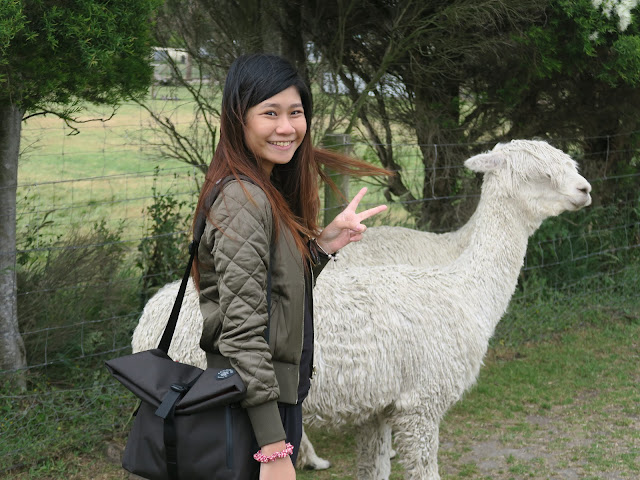 getting close with an alpaca,  Maru Koala and Animal Park, melbourne, australia