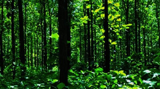 Heboh Kabar Bus Jati Mas Tersesat di Hutan Blora, Berikut Kronologi Kejadiannya