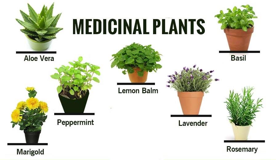 Taxonomy - Medicinal Plants ~ Help For Ag   com
