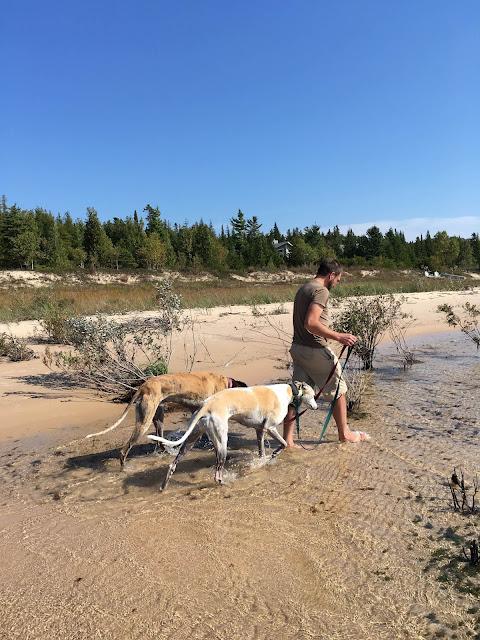 greyhounds, Beaver Island, Lake Michigan, beach, Anne Butera, My Giant Strawberry